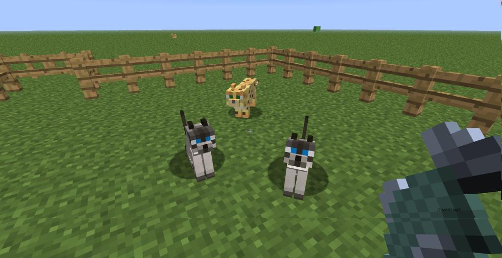Ocelot_kocka_Katze_cat_minecraft_cz_jak_ochocit_kocku_2